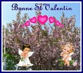 Bonne St Valentin (1)